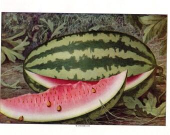 Antique Food Print Fruit Print Watermelon Kitchen Decor 11 X 8 1/2