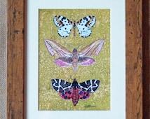 Moth art print-Moths framed, Moths On Lime Ground, Magpie,Elephant & Tiger.Print of original painting framed in a beautiful Oak effect frame