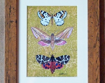 Moth art print-Moths framed, Moths On Lime Ground, Magpie,Elephant & Tiger.Print of original painting framed in a beautiful Oak effect frame