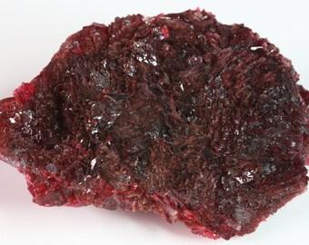 Rare Dark Crimson Red Botryoidal Wendwilsonite Crystalline Mass