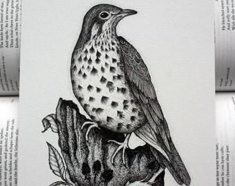 Mistle Thrush Pen and Ink Art Print