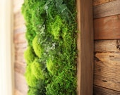 "40"" x 18"" LARGE Real Preserved Moss & Ferns in Reclaimed Wood Frame. Plant Painting®- No Care Green Wall Art."