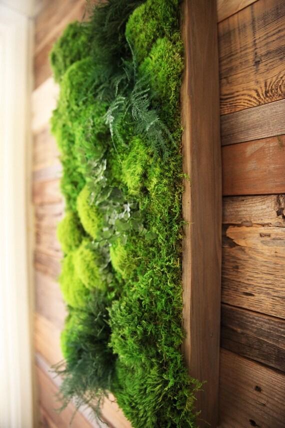 40 x 18 large real preserved moss ferns in. Black Bedroom Furniture Sets. Home Design Ideas
