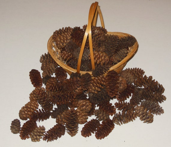 Lot of 100 small mini adirondack pine cones craft by for Small pine cone crafts