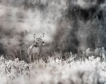 Deer, nature, sepia, fine art photograph, print, wall art
