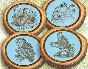 Elm Log Rounds Birds Holiday Ornaments and/or Coasters