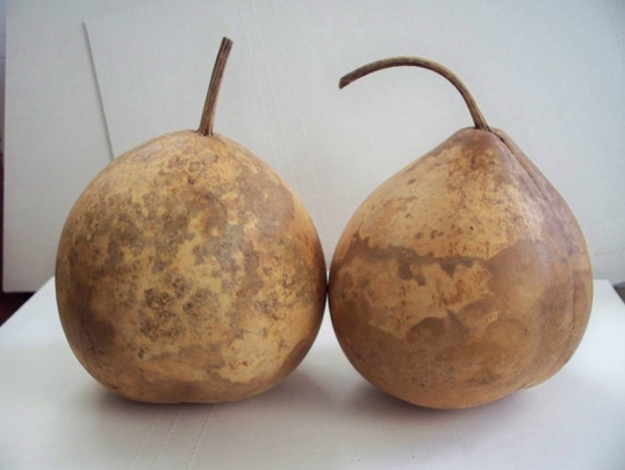 Two dried bushel gourds for crafts for Where to buy gourds for crafts