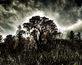The Aura, Color Photography, Panorama, Landscape Photography, Nature, Tampa