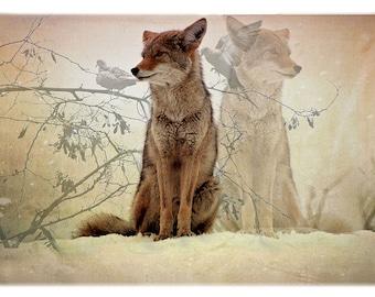 Coyote Apparition