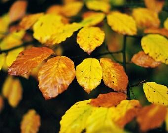 Glen Tilt 3, original fine art photography, print, landscape, leaves, scotland, blair atholl, autumn, trees, yellow, light, wet, soft, macro