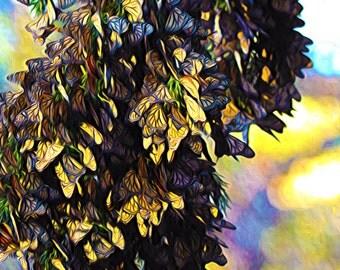 Monarchs a Big Bunch