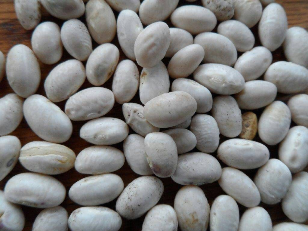 how to grow runner beans from seed