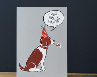 Springer Spaniel birthday card (liver or black and white dog)