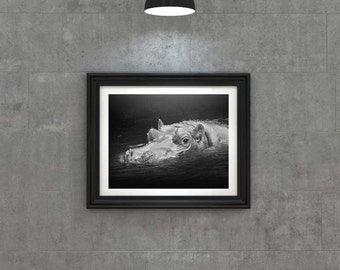 Swimming Hippo Fine Art Print, African Hippopotamus, Nature and Animal Home Decor