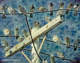 Pigeons on telephone pole watercolor print. Birds on wire painting. Pigeon painting. Pigeon wall art. Pigeon picture. Watercolor birds.