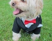 Complete Custom Made Wedding Tuxedo For Dogs