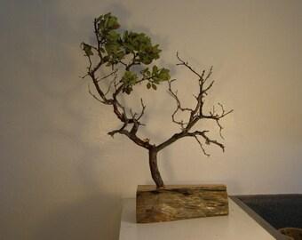 Manzanita jewelry tree with live edge wood base