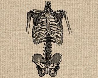 Printable Skeleton Images Skeleton Graphics Skeleton Clipart Skeleton Printable Skeleton Download Vintage Printable 300dpi HQ