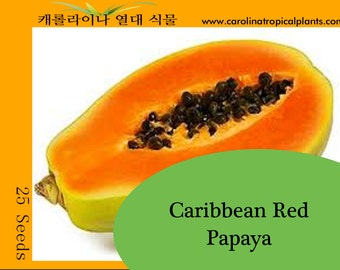 Red Caribbean Papaya seeds - 25