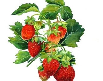 Watercolor Painting - Strawberry Painting - Watercolor Strawberry - Archival Art Print , Home Decor, Fruit Art