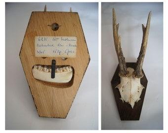 SALE 20% OFF - Vintage Real Deer Skull - Antlers - Wall Hanging - Wood Mounted Skull