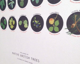 The leaves of native British trees print