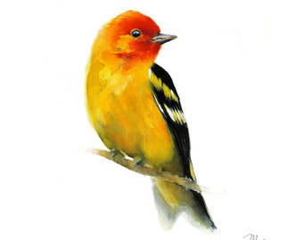 Bird watercolor painting - Western Tanager Giclee Print. Nature or Bird Illustration, small Red and Yellow bird.