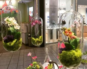 Orchid Live Plant Terrarium Glass 12 Inch