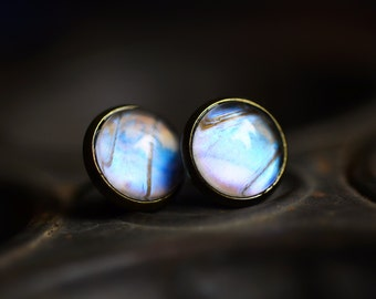 Real butterfly wing earrings pearl morpho post studs Antique Bronze Finish