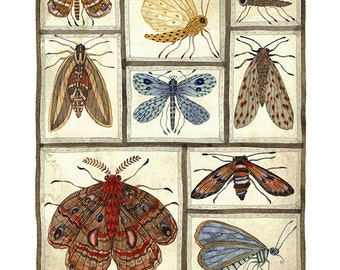 LARGE Moths Collection, entomolgy specimens, watercolor reproduction, giclee art print 13 x 19