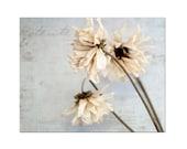 Floral Still Life Dried Flowers Neutral Decor Grey Gray Artwork