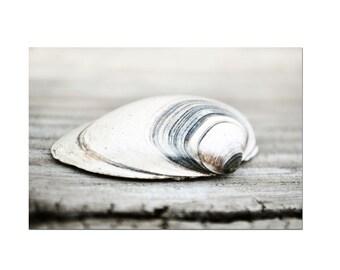 Rustic Coastal Decor Clam Shell White Seashell Print Still Life Photography Grey Art