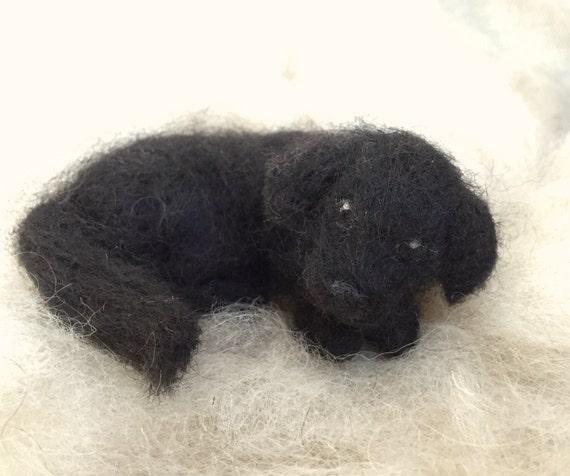 Black dog lying on back - photo#46
