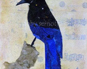 Bird Art - Art Print - Fine Art Giclee Print - Steller's Jay