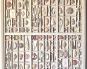 Sea Shell collage, assemblage, or mixed media art in an altered letterpress type box  or printers type case