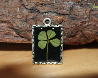 Real Four Leaf Clover Charm for St. Patrick's Day Irish Good Luck