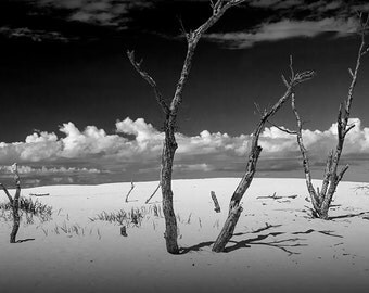 Silver Lake Dunes with Barren Tree Trunks and Puffy Clouds near Lake Michigan No.BW525 A Classic Dune Seascape Photograph
