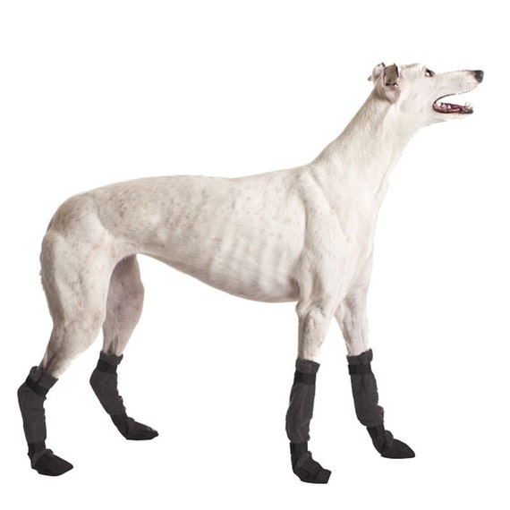 GREYHOUND Dog Booties, Dog Shoes, Dog Boots