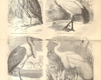 1890 Wading Birds, Waders or Shorebirds, African Sacred Ibis, American Egret, Marabou Stork, Eurasian Bittern Antique Engraving Print