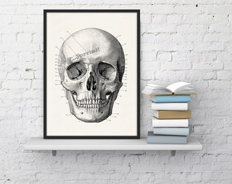 Wall art Human skull Print in black - Science prints wall art- Anatomy prints on white paper wall decor SKA011WA4