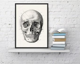 Wall art Human skull Print in black - Science prints wall art- Anatomy prints on white paper wall decor WSK010