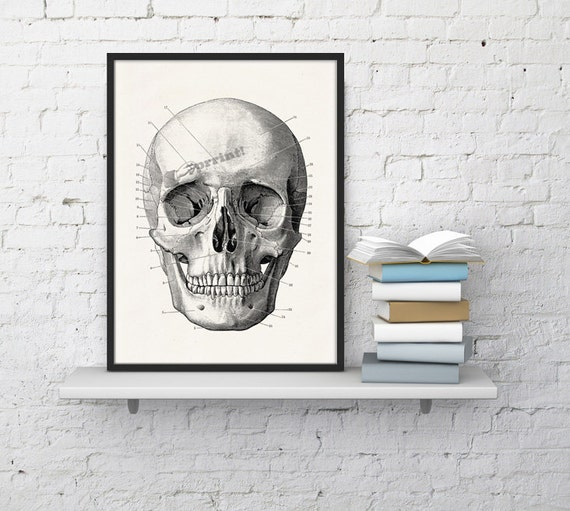 Spring Sale Wall art Human skull Print in black - Science prints wall art- Anatomy prints on white paper wall decor WSK010