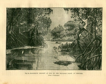 1890s Antique Print, Mangrove Thicket at Goa, Landscape Print, Geography