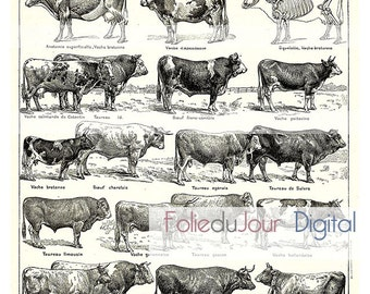 """Mothers day gift Beef Ox chart Digital file French vintage dictionary plate - 8.5 x 11"""" - Instant Download"""