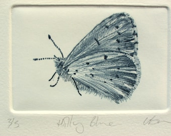 Drypoint Butterfly print. Small Holly Blue Butterfly. Limited edition.