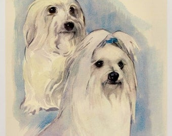 Vintage MALTESE Dog Print MALTESE Illustration Art Cottage Home Decor Dog Gallery Wall Art Gift for Dog Lover Gift 2661