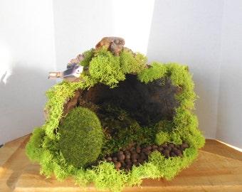 Enchanting ....Natural Cactus Boot Fairy House......Fantasy....OOAK