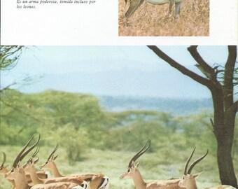5 Vintage gazelle poster
