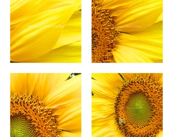 Sunflower Decor ~ Floral Print Set, Cheerful Gift for Her, 4 Photo Set, 5 x 5, Yellow Kitchen Decor, Flower Photography, 30% Off fPOE