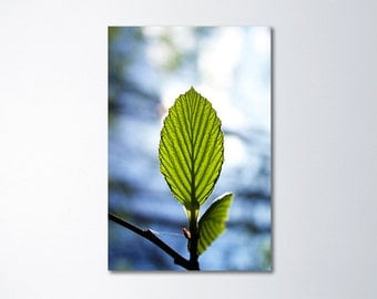 Minimalist Art, Oversized Art, Vertical Wall Art, Large Art Nature, Vertical Canvas Art, Leaf Photography, Large Canvas Art 24x36, A Miracle